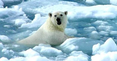 Fauna de Groenlandia