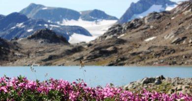 Flora de Groenlandia